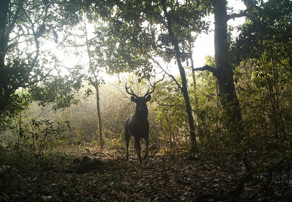 To jsem z toho jelen... Foto thebetterindia