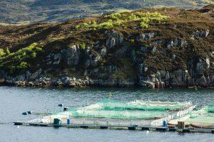 Lososí farma u pobřeží Skotska. Foto Adobe Stock